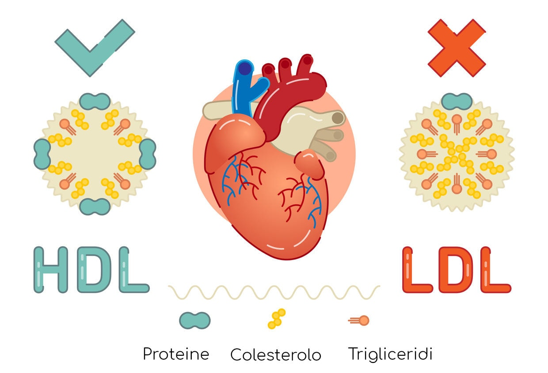 HDL vs LDL