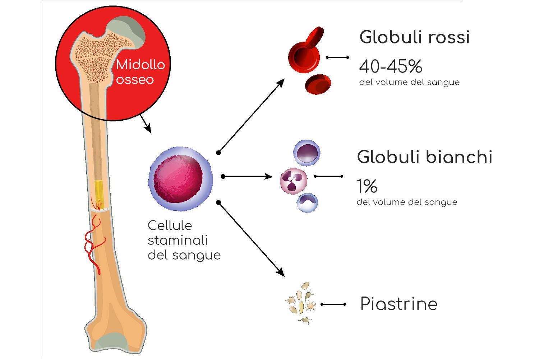 Cellule del sangue
