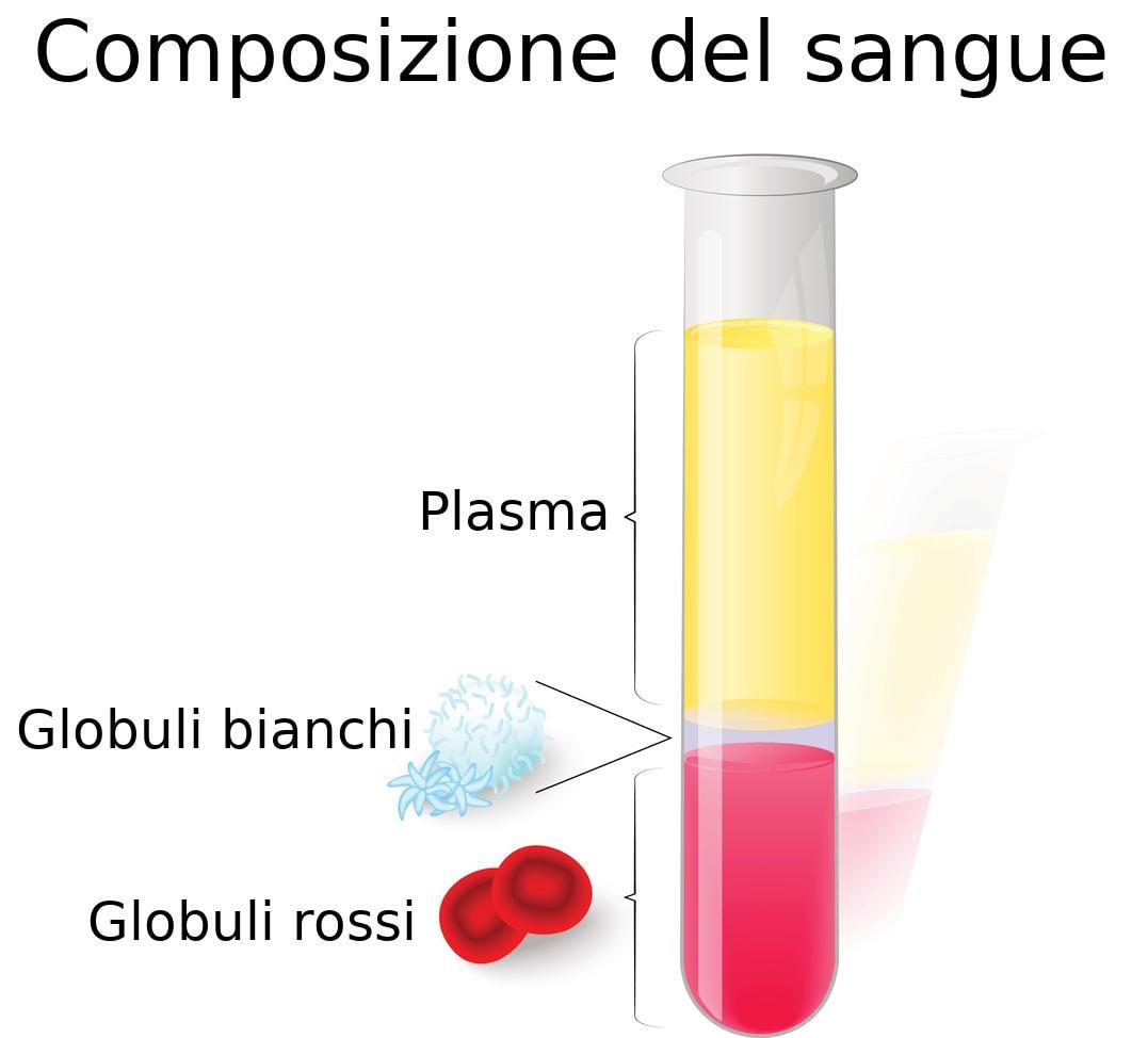 Rappresentazione grafica percentuale della quantità dei diversi costituenti del sangue