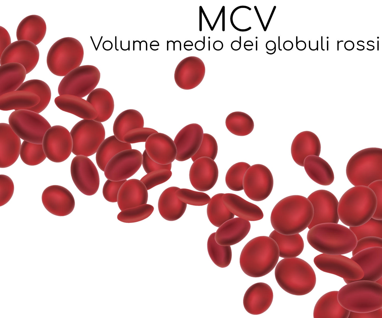 Globuli rossi su sfondo bianco