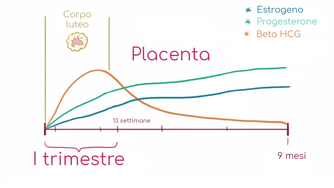 Andamento qualitativo degli ormoni in gravidanza
