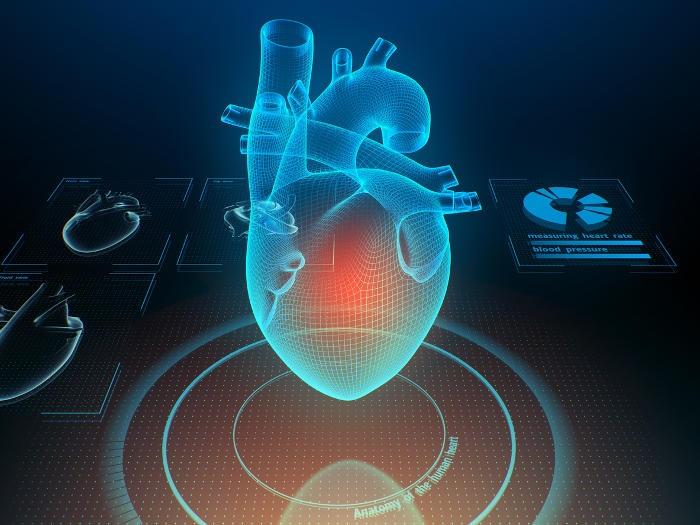 Ricostruzione grafica dell'anatomia del cuore