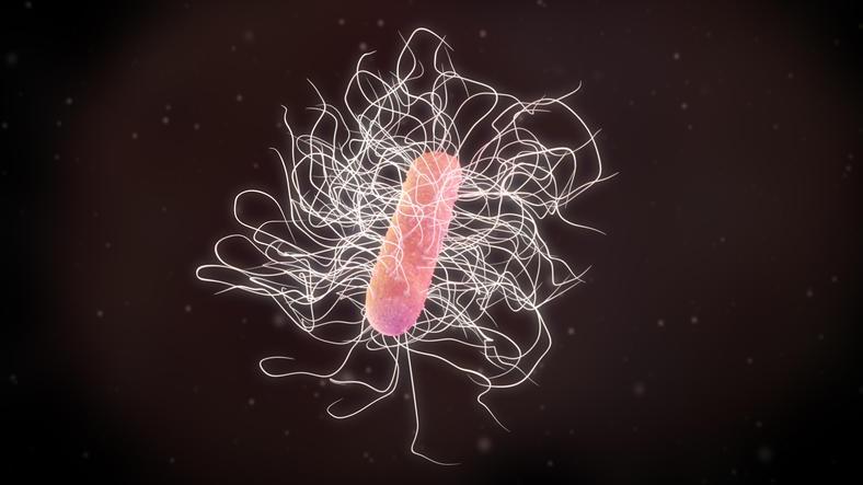Rappresentazione grafica in tre dimensioni del batterio clostridium difficile