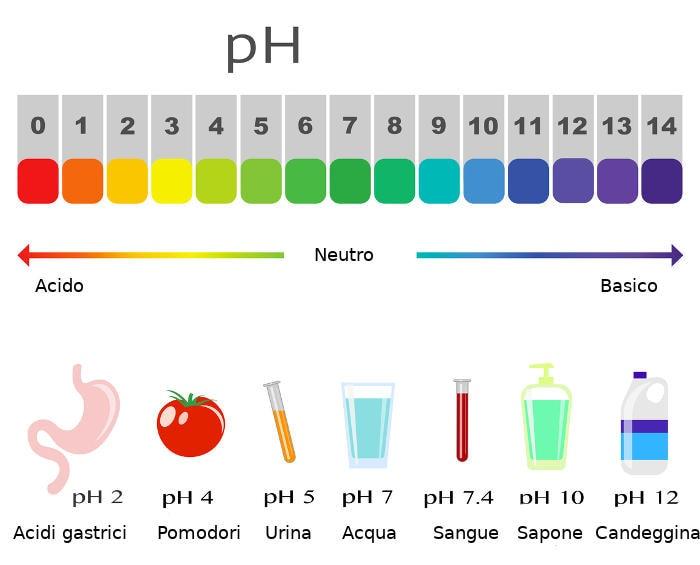 Rappresentazione grafica della scala del pH