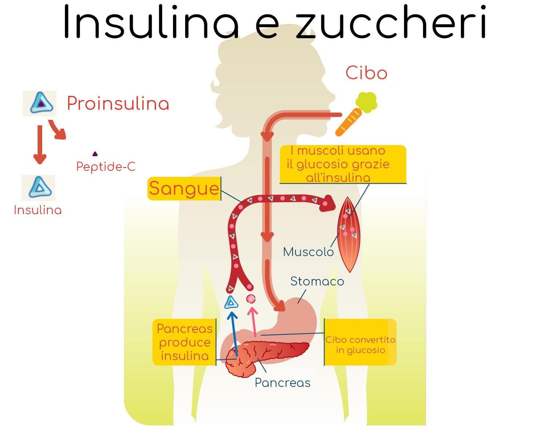 Grafica semplificata del meccanismo d'azione dell'insulina