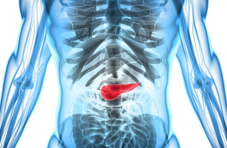 Rappresentazione grafica della posizione anatomica del pancreas