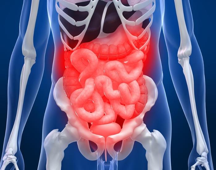 Ricostruzione grafica dell'anatomia dell'intestino