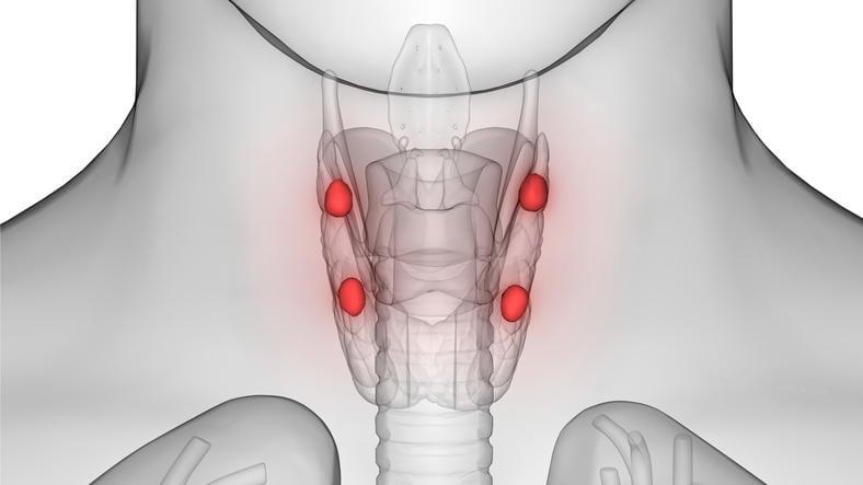 Ricostruzione grafica dell'anatomia delle paratiroidi