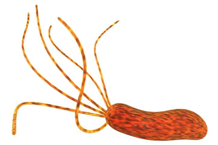 Helicobacter Pylori, rappresentazione grafica 3D