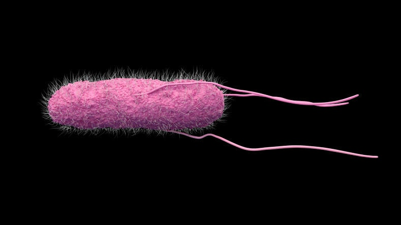 Ricostruzione grafica del batterio della salmonellosi