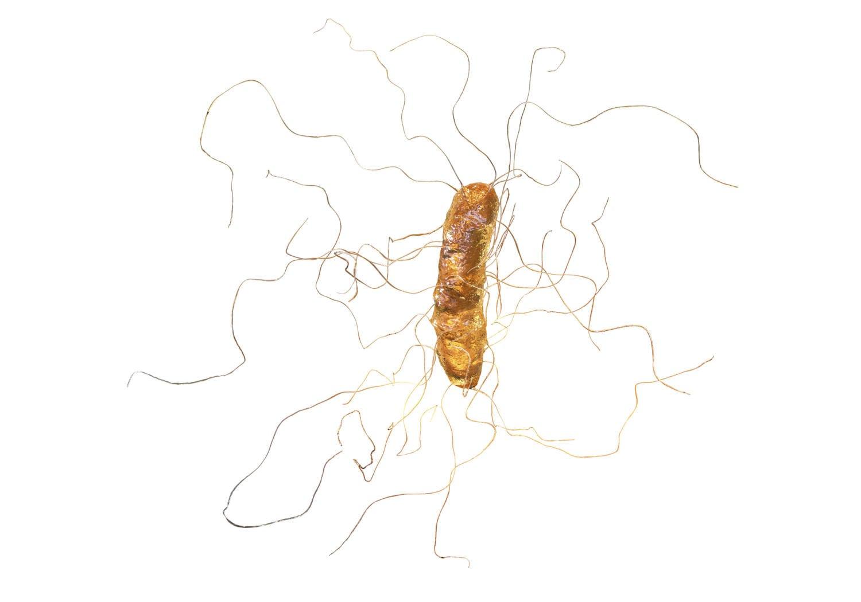 Rappresentazione grafica del Clostridium Difficile