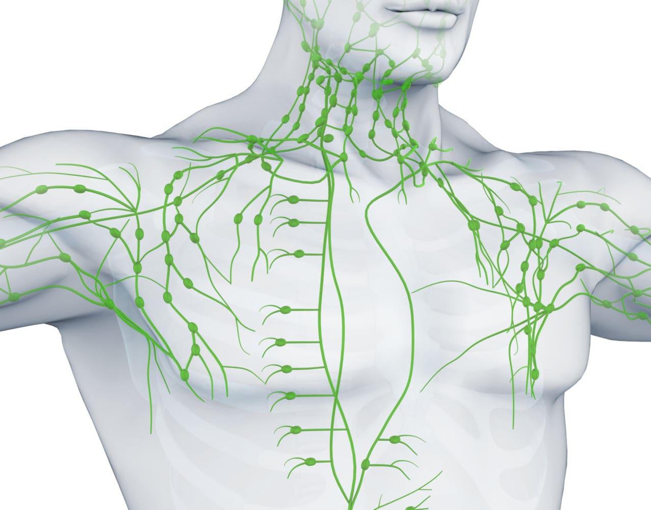 Ricostruzione grafica di alcuni linfonodi a livello di petto, ascelle e collo