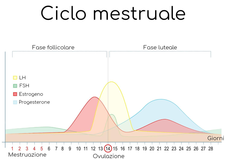 Ciclo mestruale ed ormoni