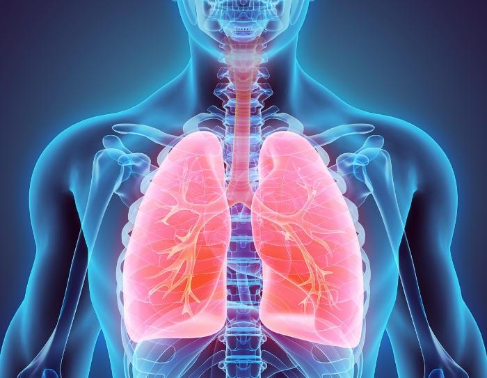 Ricostruzione grafica dei polmoni