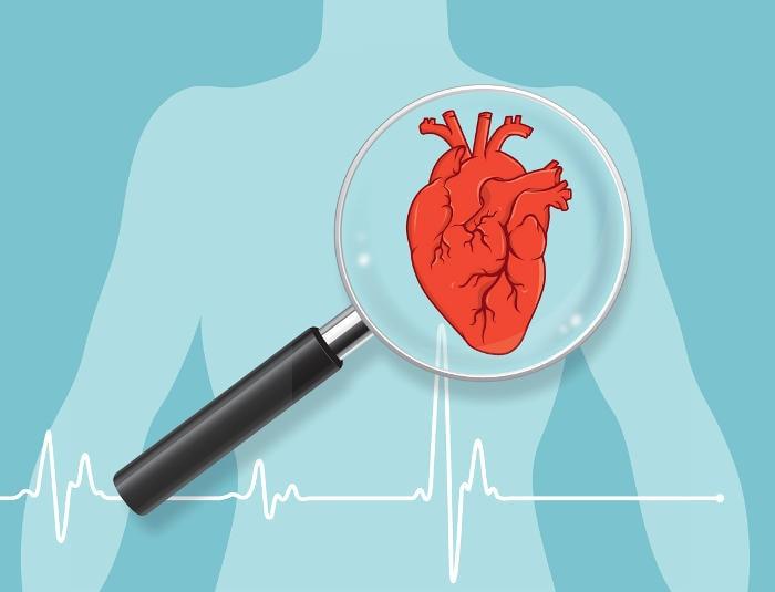 Disegno schematico del cuore