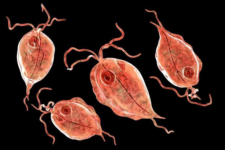 Ricostruzione grafica del Trichomonas vaginalis