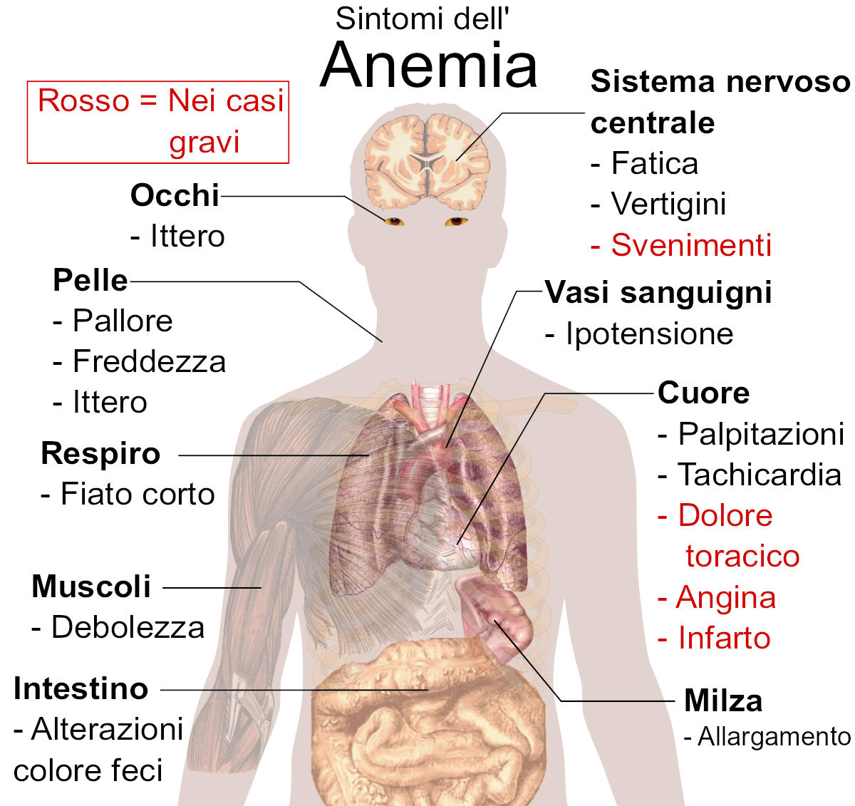 Sintomi dell'anemia