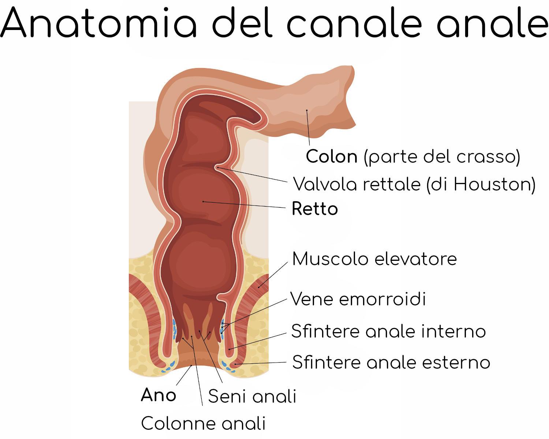 Anatomia semplificata del canale anale