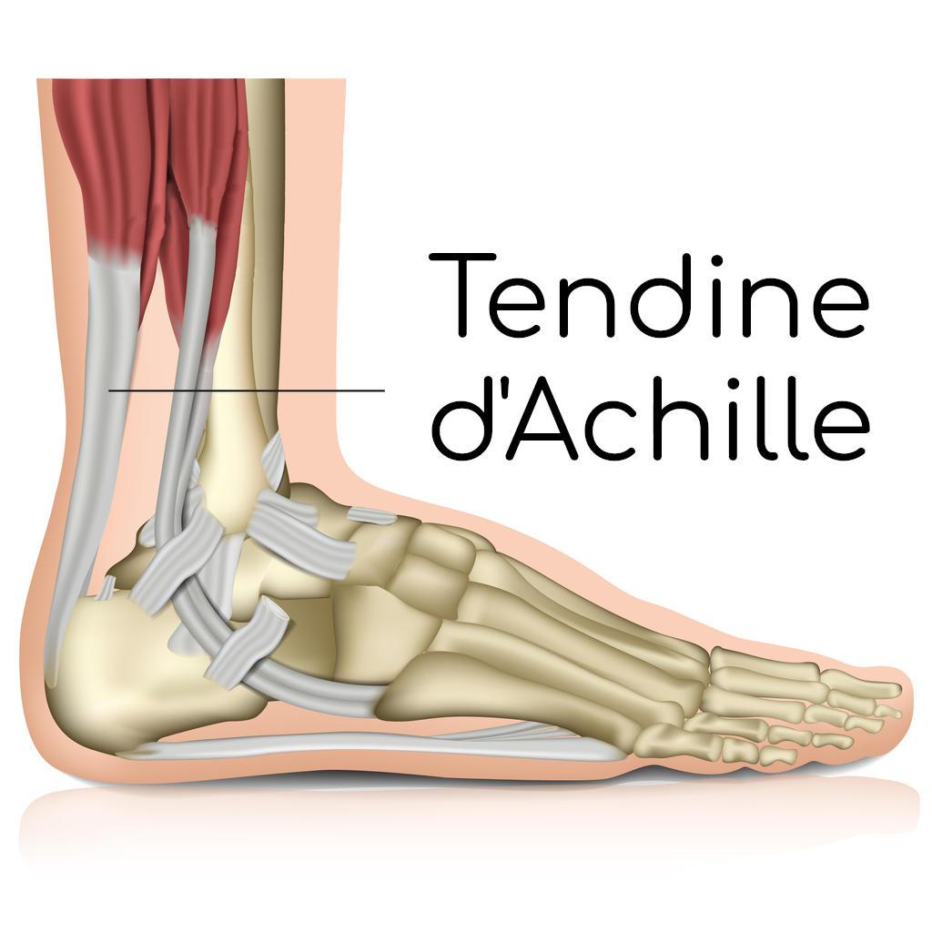 Anatomia del tendine d'Achille