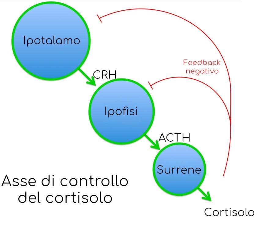 Asse ormonale di produzione del cortisolo